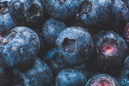 Fresh Blueberries - 16oz