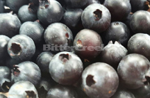 Blueberry Blitz Flavor Oil