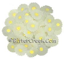 White Daisy Wax Embeds