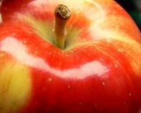 Macintosh Apple Premium Fragrance Oil *Surplus