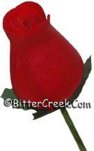 Red/Black Wood Roses
