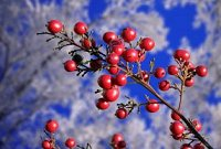 Twigs & Berries