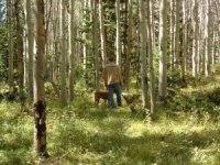 Walk in the Wood Fragrance Oil *Surplus