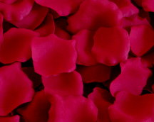 Classic Red Silk Rose Petals