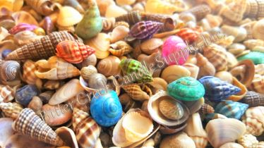 "1/4-5/8"" Dyed & Natural Shells - 1lb"