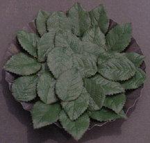Green Silk Rose Leaves(100)