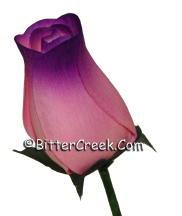 Pink-Purple Wood Roses