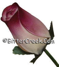 White Raspberry Wood Roses