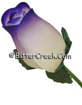 White Purple Wood Roses