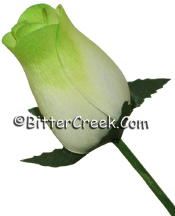 White Spring Green Wood Roses