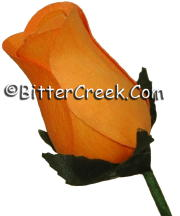Pumpkin Wood Roses