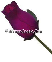 Royal Purple Wood Roses