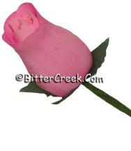 Petal Pink Wood Roses