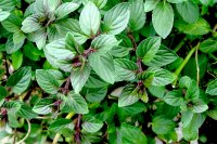 Wintergreen Air Freshener Fragrance Oil *Surplus