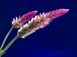 Tropical Bloom Fragrance Oil *Surplus~~ (16oz)