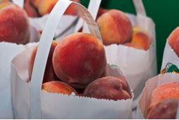 Honeysuckle Peach (Surplus)