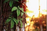 Rainforest Blossom *NEW