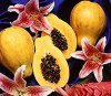 Gel Aromas Papaya Passion (oz)