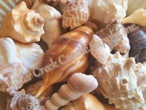"""1-3"""" Natural Shells - 1lb"""