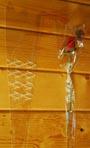 Cellophane Wooden Rose Long Sleeve